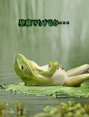 カエルの昼寝.jpg