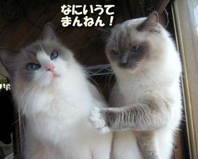 ツッコミ猫.jpg