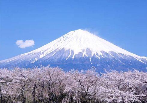 富士山とさくら.jpg