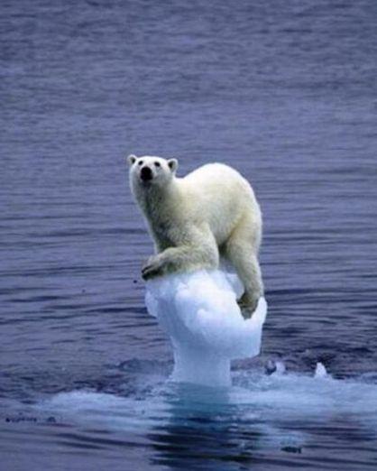 氷の上のシロクマ.jpg