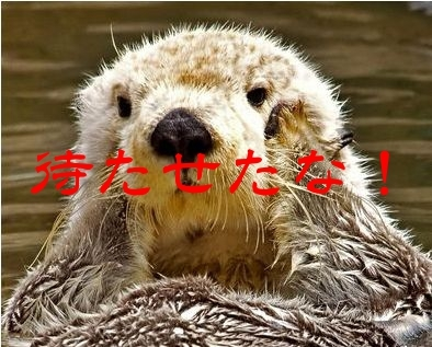 らっこ画像5.jpg