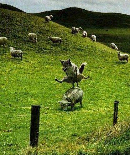 馬跳び.jpg